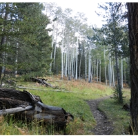 Kachina Trail #150