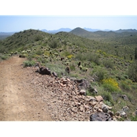 Norterra Preserve/Sonoran Loop