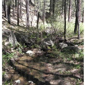 Schultz Creek Trail #152